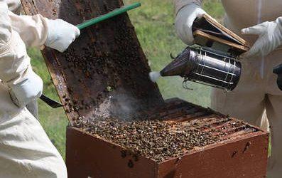 Equipo personal para el manejo de las colmenas